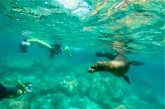 7 Water Activities in Cabo San Lucas You Need to Try: Snorkeling - Thanks to the crystal clear waters of Cabo, you can have the best experience in any place of your choice. For the full list of activities click on the photo #Snorkeling #Cabo #SeaOfCortez
