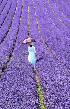 Lavender Fields In Provence, France. Don't love lavender scent that much but this photo is breathtaking! Beautiful World, Beautiful Places, Beautiful Pictures, Inspiring Pictures, Simply Beautiful, Parasols, Umbrellas, Provence France, All Things Purple