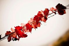 Vineyards in Autumn  Leaves  8x12 wall decor by gio978 on Etsy, $31.00