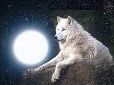 lupi bianco
