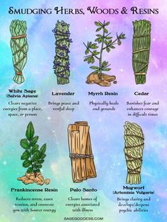 Using herbs are resins are one of my favorite tools for clearing negative energy. Here are some of the most common smudge sticks and resins and their Chakra Heilung, Smudging Prayer, Sage Smudging, Witchcraft For Beginners, Wicca For Beginners, Herbal Magic, Magic Herbs, Baby Witch, Wiccan Spells