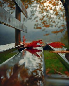 Fall Pictures by Jessie Autumn Photography, Creative Photography, Amazing Photography, Halloween Photography, Autumn Aesthetic, Fall Pictures, Belle Photo, Autumn Leaves, Red Leaves