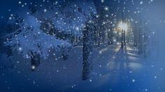 Футаж Зимнее утро в лесу HD