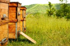 Wondering where you should set up your beehive? Beekeeping is where nature and convenience meet. Here are 10 pro beehive placement tips for blissful bees! Brand Packaging, Packaging Design, Hive Stand, Curious Creatures, Natural Honey, Open Field, Bee Keeping, Ad Design, Beekeeping