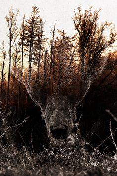 Raw Nature - Stian Norum Collab Framed Art Print by Andreas Lie - Vector Black - Tribal Tattoos, Tattoos Skull, Dreamcatcher Tattoos, Dove Tattoos, Celtic Tattoos, Tatoos, Tattoos For Dad Memorial, Spirit Bear, Hunting