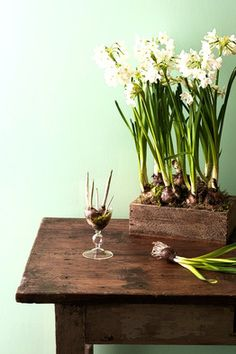 Forcing Bulbs:  Place pebbles in the bottom of a glass vase or cup—the pebbles will prop up the bulb so only the roots touch the water. (If the bulb sits directly in water it will rot.) Another option is to force bulbs by planting them in a wooden box in shallow soil, root-side down.