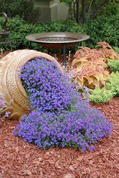 Waterfall Blue lobelia, a perfect floral imitation of water flowing from the pot. Riverdene Gold Mexican Heather gives a lime green colour around the container, and Rustic Orange coleus in behind looks good with the heather and the intense blue of the lobelia.