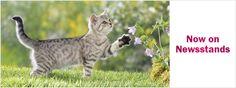 Are essential oils safe for cats? | Feline Wellness Magazine