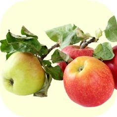 aceto balsamico di mela VOM FASS