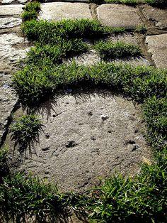 grass-grow-through-pave-stone Get Paved!