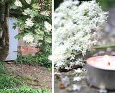 seidenfein 's Dekoblog: Garten im Regen .... garden in the rain