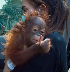 The viral image featured 7-month-old Vena, a victim of the illegal -- and flourishing -- orangutan pet trade.