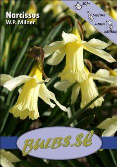 NarcissusW.P. Milner