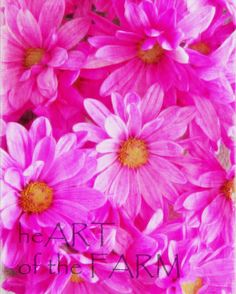 Bright Pink Daisies by heARToftheFARM on Etsy, $120.00