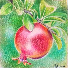 Pomegranate on Tree - Original Coloured Pencil Painting - Beautiful Fruit Wall Art - Home & Kitchen Decor Gift