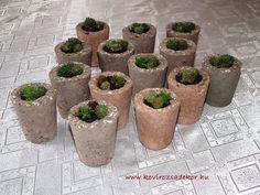 succulent wedding favor, kövirózsa esküvői köszönetajándék Succulents, Planter Pots, Decor, Decoration, Succulent Plants, Decorating, Deco