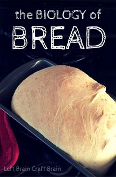 Learn what makes bread rise and other interesting facts about bread with The Biology of Bread. Bring the kids into the kitchen and help them learn biology!
