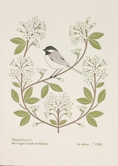 black capped chickadee & mayflower - massachusetts bird and bloom