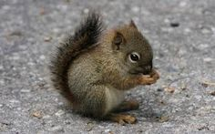 Fingerplays & Action Rhymes: Little Squirrel