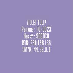 Violet Tulip - Pantone Colours