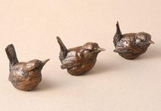 wrens by simon griffiths