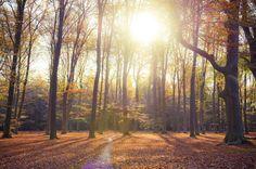 Autumn forest van Judith Noorlandt op dibond, canvas, ingelijst of als poster.