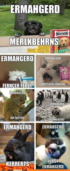 Animal Memes: Ermahgerd! Erll the Ernuhmurls!