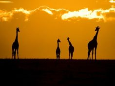 Africa dream-vacations