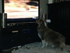 There's nothing more that Newman loves more than watching hunting shows and chasing the deer.