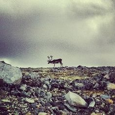 First sighting of Rudolf!  User: yasminii