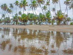Trinidad Coconut Grove | Manzanilla Beach Houses - Trinidad