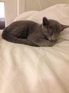 Felix sover i sengen