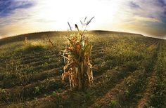 http://www.ecologiaverde.com/wp-content/2010/04/agricultura-cambio-climatico.jpg