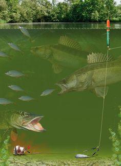 Float leger rig for predator fish