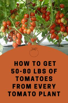 Planting a garden can be a lot of fun but get a harvest is really what it is all about. These home grown tomatoes offer much more flavor than those sold at the grocery stores and even at many marke… Diy Planters, Garden Planters, Planting Vegetables, Veggies, Tomato Plants, Growing Tomatoes, Outdoor Plants, House Plants, Harvest