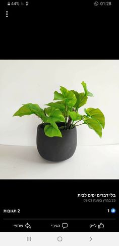 Planter Pots, Herbs, Bathroom, Washroom, Full Bath, Herb, Bath, Bathrooms, Medicinal Plants