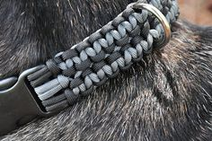 Paracord Designs: 550 paracord Dog Leash and Collars in action.