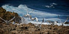 Curacao birds. Photography by Carlo Walle.