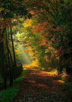 insight Beautiful World, Beautiful Places, Beautiful Pictures, Beautiful Nature Wallpaper, Beautiful Landscapes, Natur Wallpaper, Landscape Photography, Nature Photography, Forest Path
