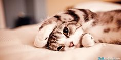 Cute Cat In Bed Twitter Header Photo