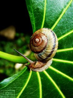 Amphibians, Mammals, Snails In Garden, Snail Shell, Nature Images, Animal Photography, Travel Photography, Nature Animals, Exotic Pets