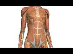 Syvien vatsalihasten treenaus - YouTube