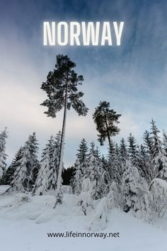 A Norwegian winter is a popular tourist time for those interesting in skiing or seeing the northern lights.
