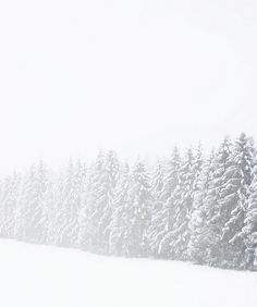 Find images and videos about white, snow and forest on We Heart It - the app to get lost in what you love. I Love Snow, I Love Winter, Winter Snow, Winter White, Winter Christmas, Christmas Tree, Thanksgiving Holiday, Cozy Winter, Snow White