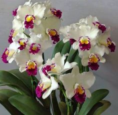 Sign in to access your Outlook, Hotmail or Live email account. Unusual Flowers, Rare Flowers, Beautiful Flowers, Orquideas Cymbidium, All About Plants, Growing Orchids, Purple Orchids, Lavender Roses, Exotic Plants