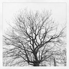 Black and white tree.