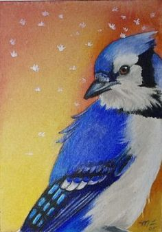 Blue Jay Bird Art   via Etsy.