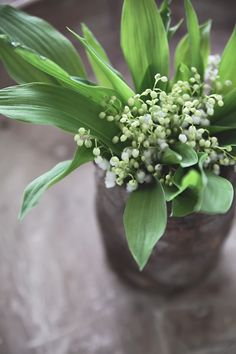 Lily of the valley | Helt enkelt | Sköna Hem