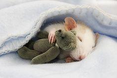 Trop mignon cet un bébé souris qui faait un ptit dodo