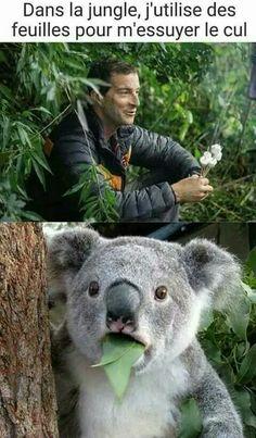 Gag and Memes: Koala bear does not approve Funny Koala, Funny Bears, Funny Animals, Cute Animals, Koala Meme, Bear Meme, Really Funny, Funny Cute, Hilarious